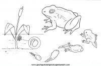 disegni_da_colorare_animali/animali_acquatici/pesci_24.JPG