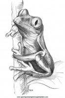 disegni_da_colorare_animali/animali_acquatici/pesci_31.JPG